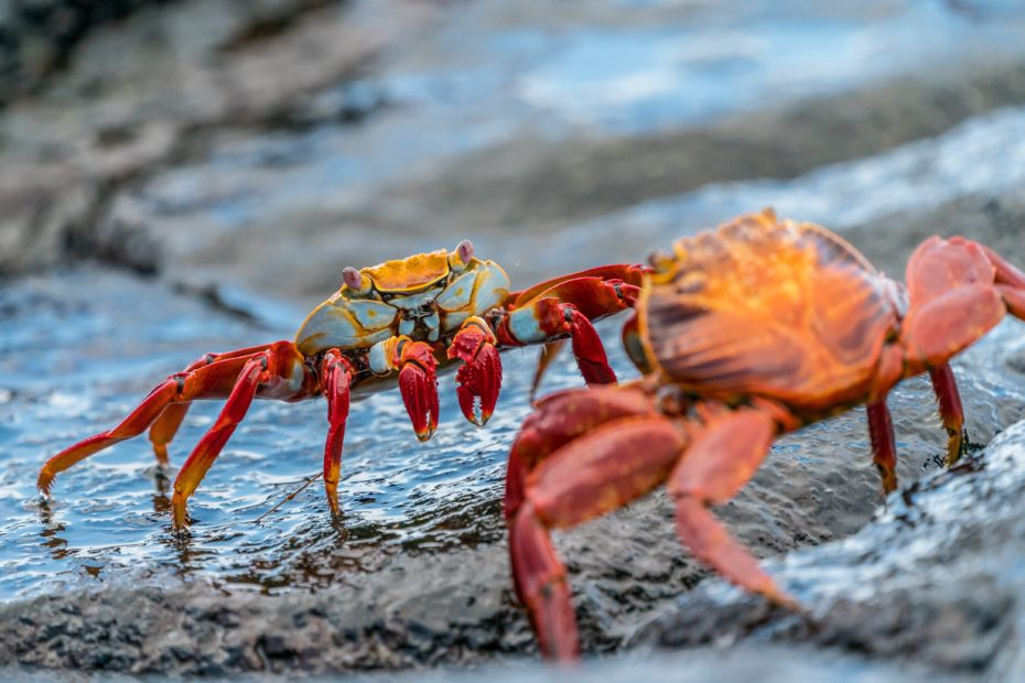 Crabs squaring off against each other; crab-bucket syndrome puts us against one another instead of proud of each other's achievements.